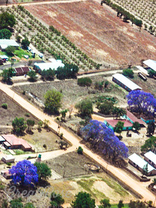 Air Shot highlighting the Jacaranda Trees