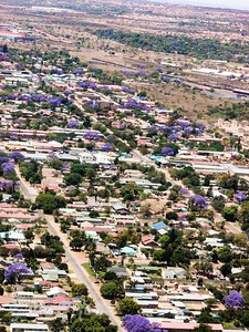 Air shot of a town and the colourful Jacaranda