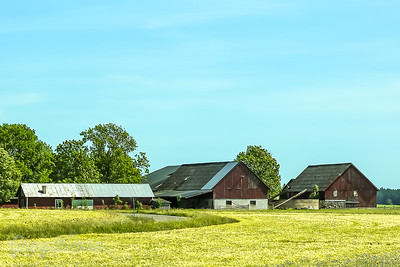 Typical Farm houses Gotland