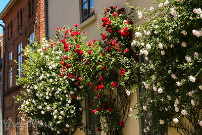 Roses as a Street's Theme in Wismar