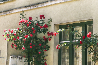 Roses adorn the buildings