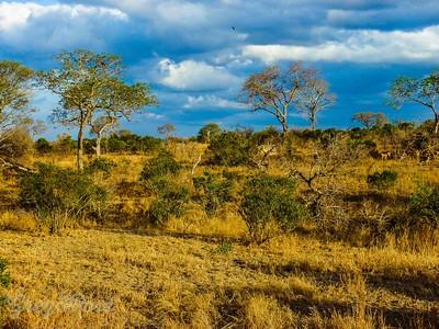 Typical African Bush scene