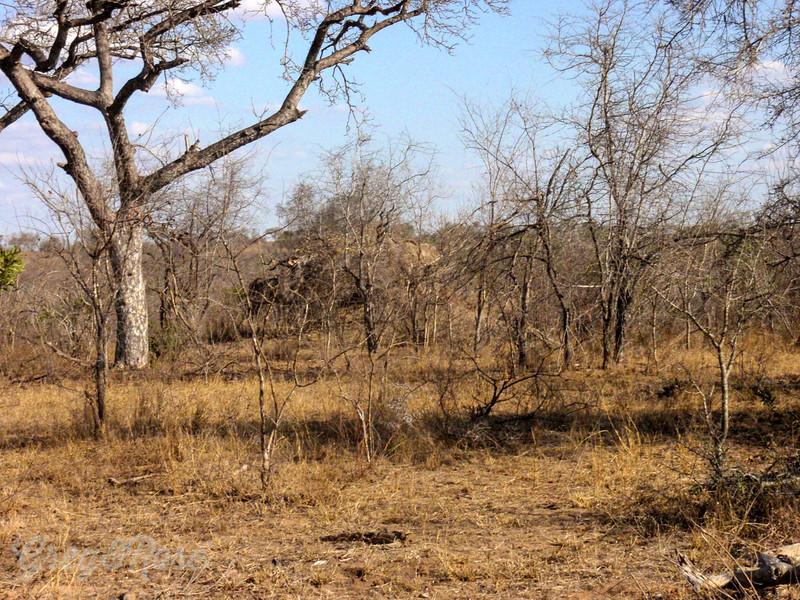 Typical arid bush area