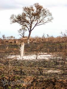 Regenerating Bush after a fire