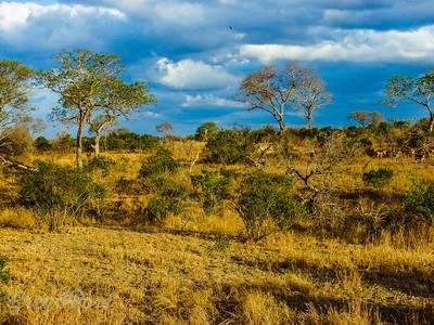 Stunning African landscape seems to get into your soul.