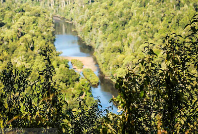 River running through the Tarkine Forest , Tasmania