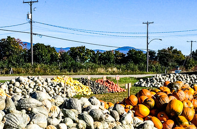 Pumpkins for sale Quebec
