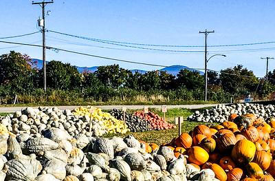 Pumpkins for sale Quebec