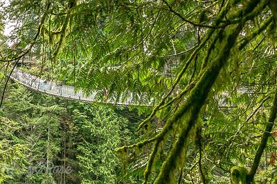 Suspension bridge through the trees