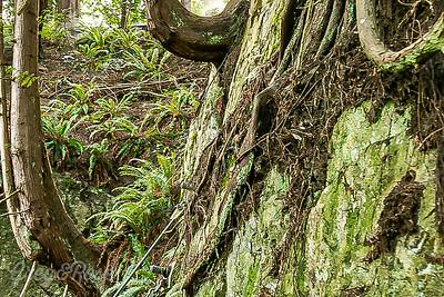 Extraordinary shaped trees