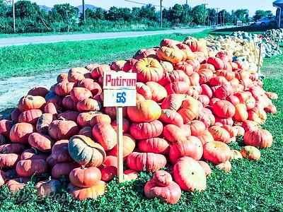 More and More Pumpkins