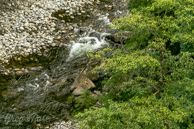 Small rapid area of the Capilano River