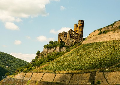 Ruin perched above the Rhine