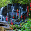 Cardinal Flower on falls into High Falls Lake, Algonquin Provincial Park, Ontario