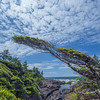 Wild Pacific Trail, near Ucluelet, British Columbia