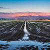 Sunset Irrigation, Skagit Valley