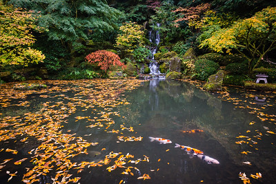 Fall colors at the Japanese Gardens in Portland, OR.