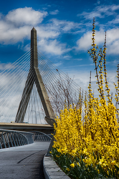 Zakim Bridge and Spring Flowers