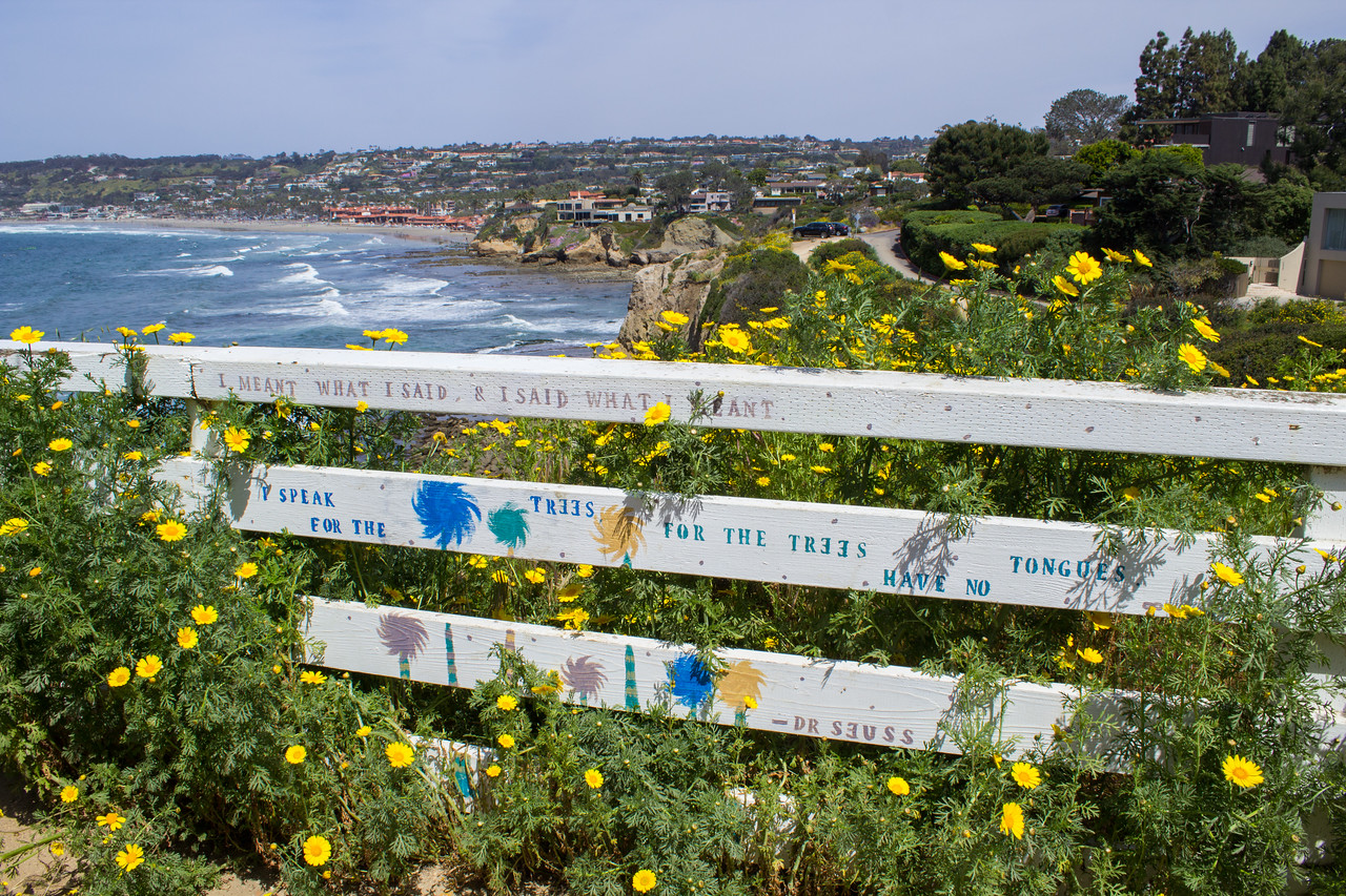 A surprise encounter with the Lorax on the La Jolla Coast Walk Trail.