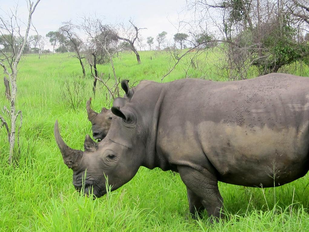 Rhino Mala Mala South Africa (c) 2011