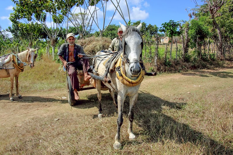 Farmers iwith horsedrawn wagon along a highway, Cuba (2015)