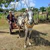 Farmers iwith horsedrawn wagon along a highway, Cuba (2015)