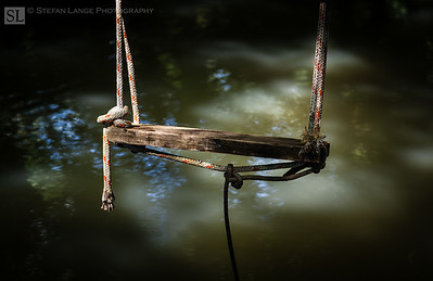 Swing by a River