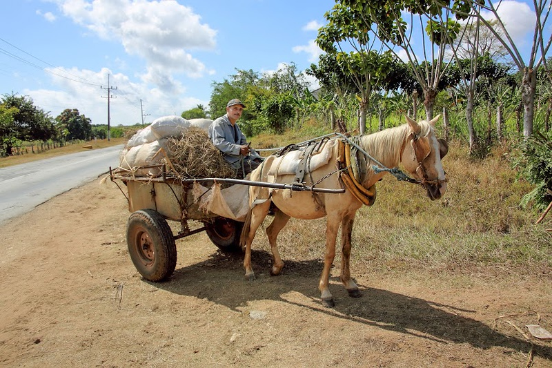 Farmer in a horsedrawn wagon along a highway, Cuba (2015)