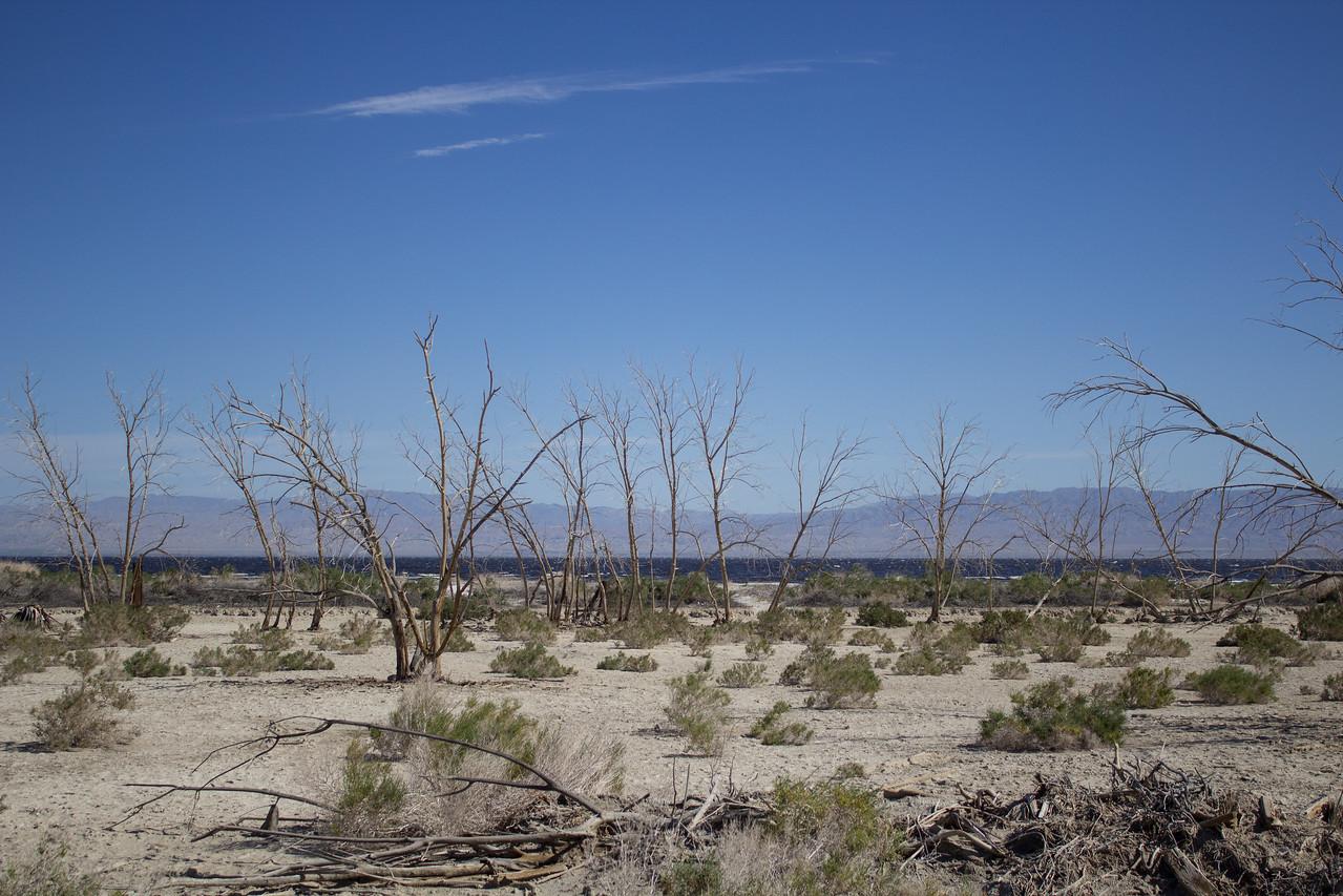 A glimpse of the infamous Salton Sea.