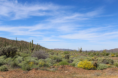 Desert scene on the drive from San Diego to Guerrero Negro.