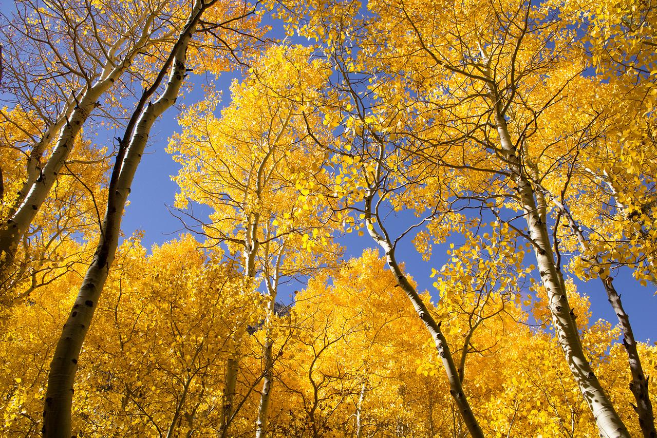 Fall colours at Silver Lake.