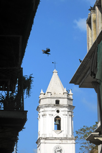Black Vultures, Panama City, Iglesia de San Jose Casco Viejo