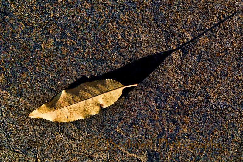 Martian Leaf