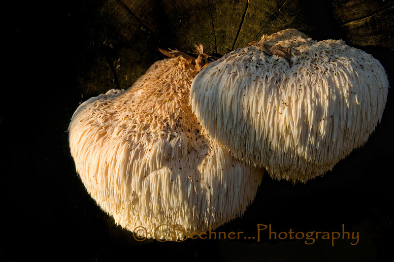 12-29-2010...  Found Fungus...