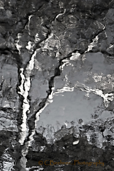 Reflections Of The Night Before...<br /> <br /> A sycamore in Big Chico Creek...
