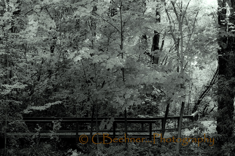 Green Bridge<br /> <br /> The Tree Farm...
