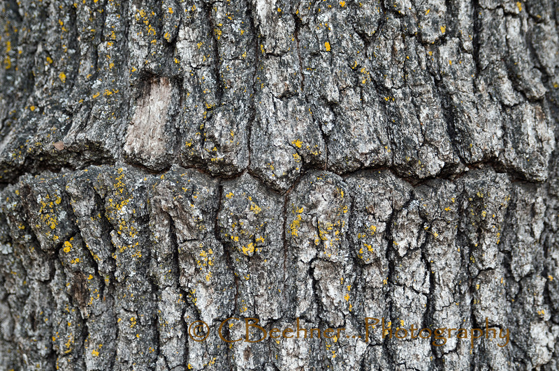 Line In The Bark