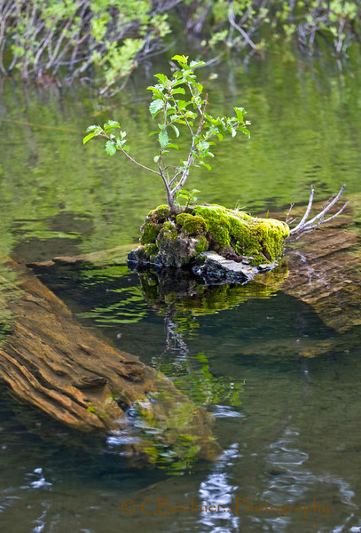 I did not see the face in the log until later...a Bonzi in the lake...