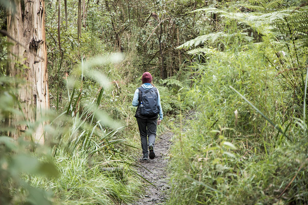 Olinda Falls in the Dandonong Ranges. A short walk from the car park near the top of Mt Dandenong