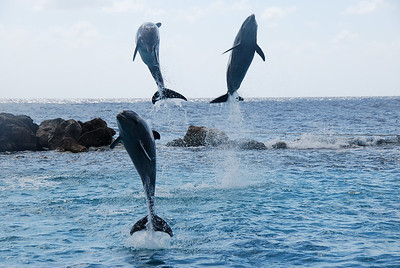 033  Jumping Dolphins