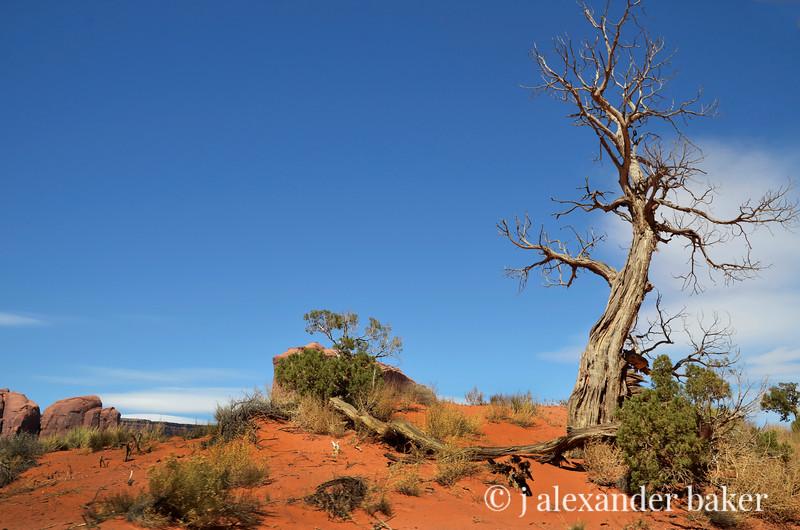 Juniper, Monument Valley, Navajo Nation, USA