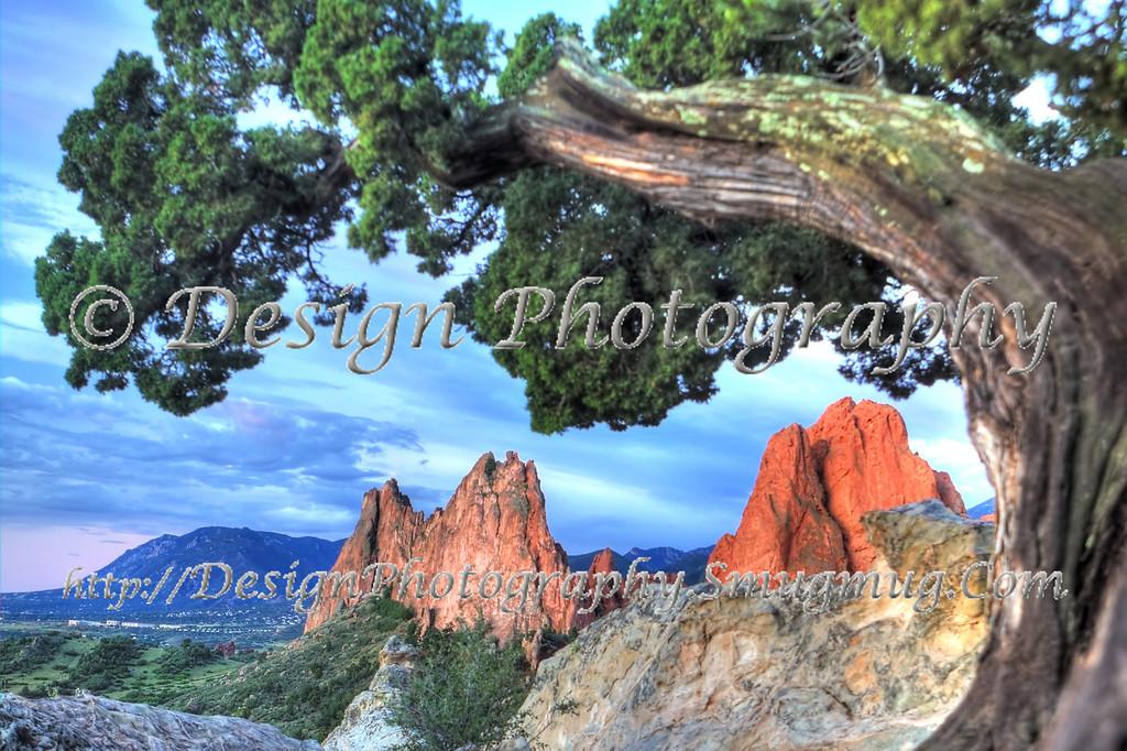 Garden of the Gods under a Juniper Tree, Colorado Springs, Colorado