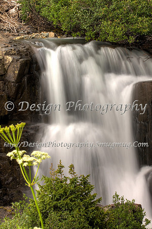 White Flowers by Twin Falls, Colorado
