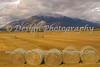 Harvest at Mount Princeton