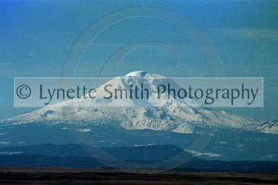 MT+Adams+copy-60040797-Owtmk