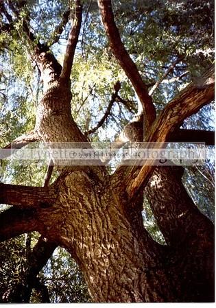 tree-60041754-Owtmk