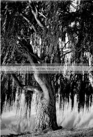 tree+hydro+pk-131519247-Owtmk