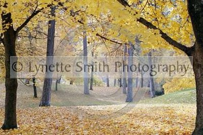 Fall+copy-60040124-Owtmk
