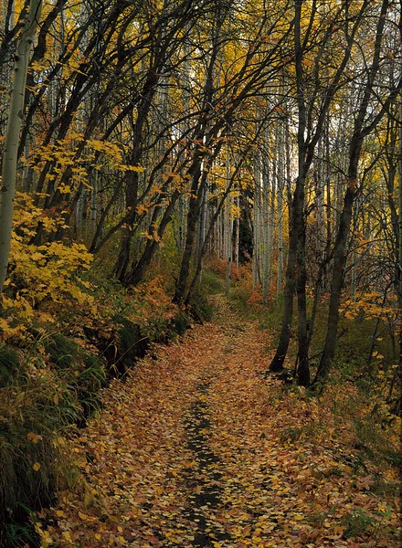 Spiro Trail