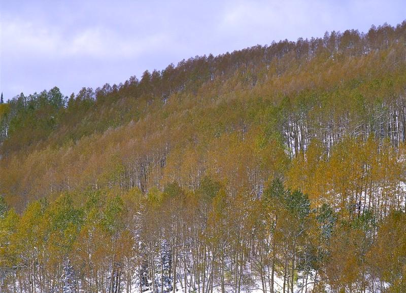 Painted Hillside